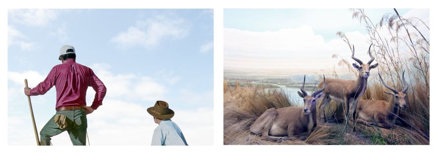 Human Zoo #2, #3, 2012.